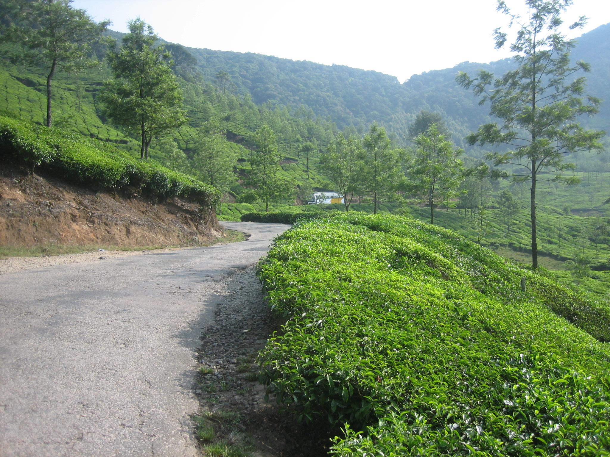 Straße durch die weiten Teeplantagen