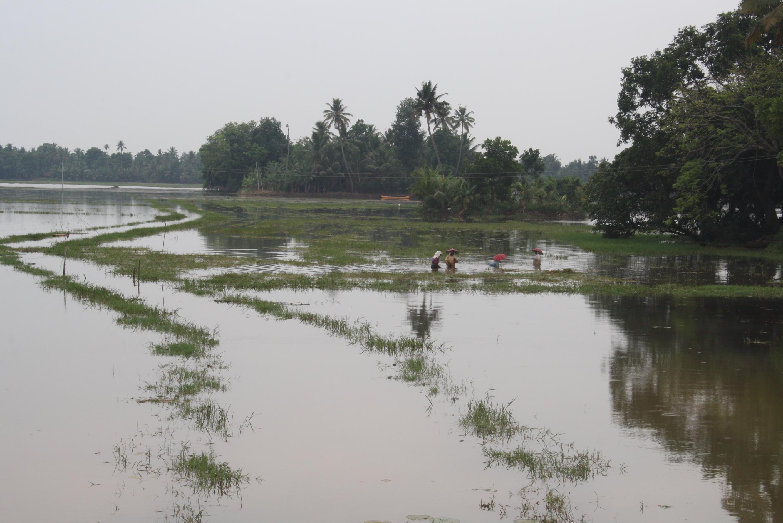 Kuttanad - eine Wasserwüste?
