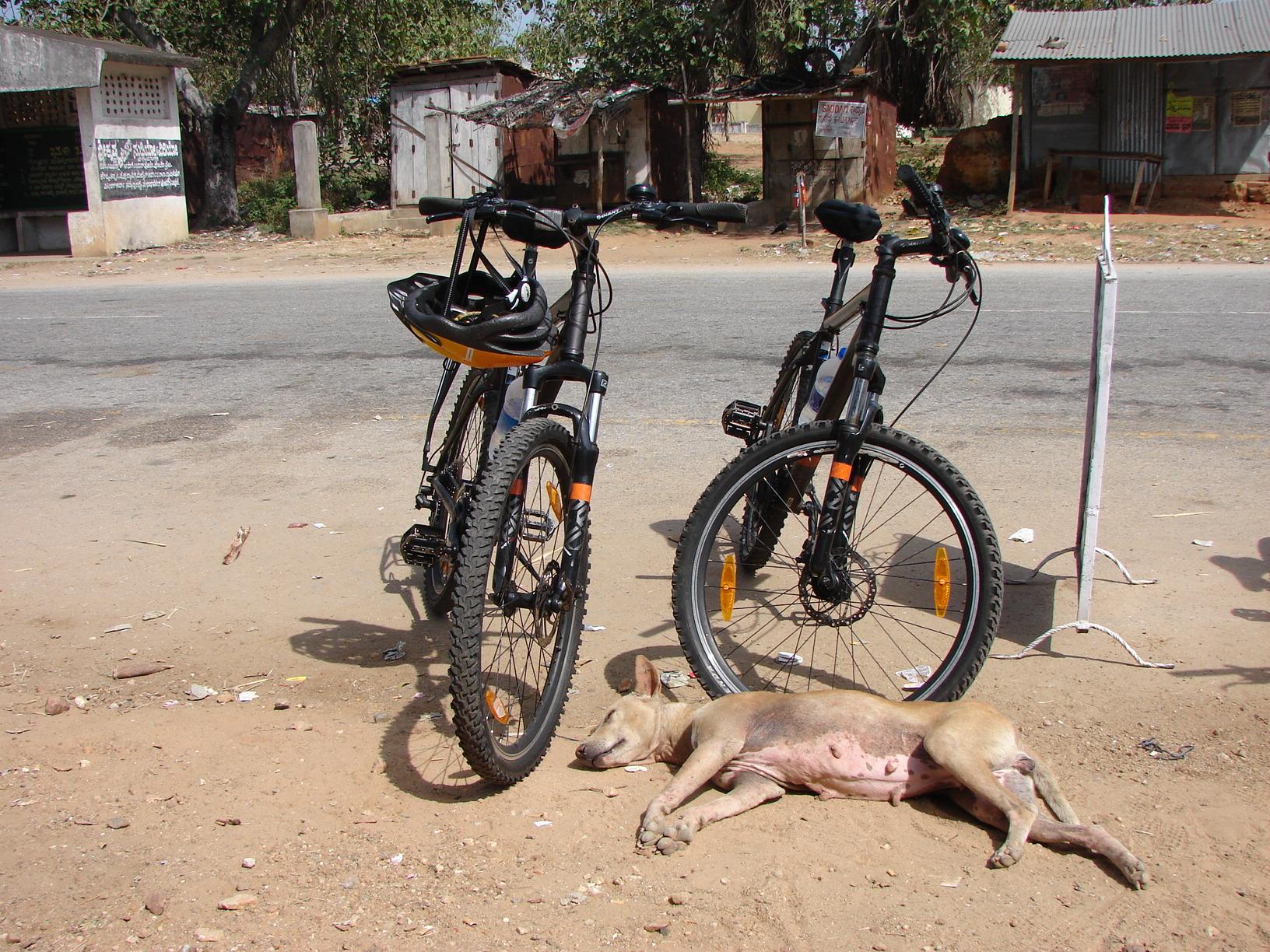 Hund ruht sich vor unseren Fahrrädern aus
