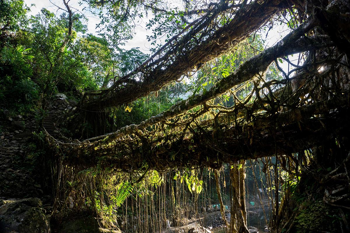Megahalaya - Dschungelfeeling